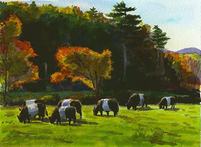 belted galloway cows